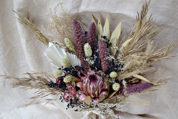 protea dried flowers
